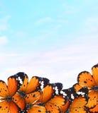 Mondo di magia delle farfalle Immagine Stock