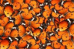 Mondo di magia delle farfalle Immagine Stock Libera da Diritti