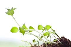 Mondo di piccola pianta Fotografia Stock Libera da Diritti