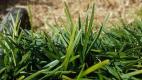 Mondo Grass fotografia stock libera da diritti