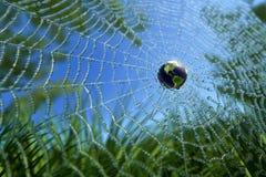 Mondo nel Web largo (concetto di WWW) Immagini Stock