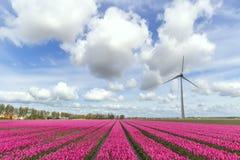 Mondo sostenibile di energia Fotografia Stock