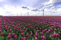 Mondo sostenibile di energia Immagine Stock