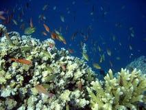 Mondo subacqueo Fotografia Stock Libera da Diritti