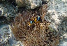 Mondo subacqueo Fotografie Stock