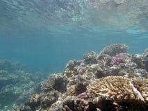 Mondo subacqueo Fotografie Stock Libere da Diritti