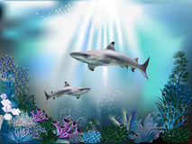 Mondo subacqueo Fotografia Stock