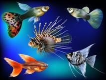 Mondo subacqueo Immagini Stock