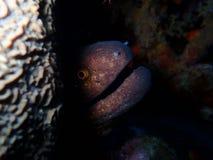 Mondo subacqueo in acqua profonda nella flora dei fiori delle piante e della barriera corallina nella fauna selvatica del mondo b fotografie stock
