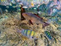 Mondo subacqueo Astonishing del Mar Rosso fotografia stock libera da diritti