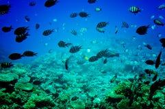 Mondo subacqueo Astonishing del Mar Rosso. immagini stock libere da diritti