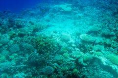 Mondo subacqueo Astonishing del Mar Rosso. immagini stock