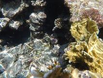 Mondo subacqueo del Mar Rosso nell'Egitto Immagini Stock Libere da Diritti