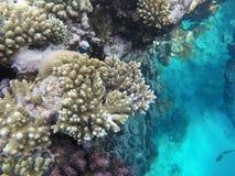 Mondo subacqueo del Mar Rosso nell'Egitto Fotografie Stock