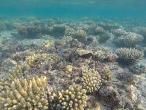 Mondo subacqueo del Mar Rosso nell'Egitto Fotografia Stock