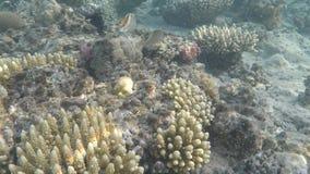 Mondo subacqueo del Mar Rosso nell'Egitto archivi video
