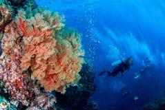 Mondo subacqueo meraviglioso fotografia stock