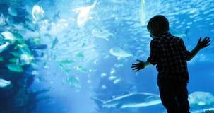 Mondo subacqueo meraviglioso con i coralli ed il pesce tropicale immagine stock