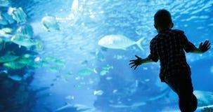 Mondo subacqueo meraviglioso con i coralli ed il pesce tropicale immagini stock