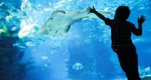 Mondo subacqueo meraviglioso con i coralli ed il pesce tropicale fotografia stock libera da diritti