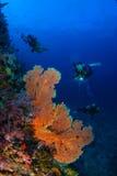 Mondo subacqueo meraviglioso con immersione con bombole della giovane donna fotografia stock