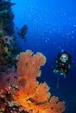 Mondo subacqueo meraviglioso con immersione con bombole della giovane donna Fotografie Stock