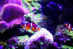 Mondo subacqueo meraviglioso e bello con i coralli ed il pesce tropicale fotografie stock