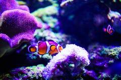 Mondo subacqueo meraviglioso e bello con i coralli ed il pesce tropicale immagine stock