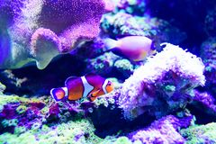 Mondo subacqueo meraviglioso e bello con i coralli ed il pesce tropicale fotografia stock