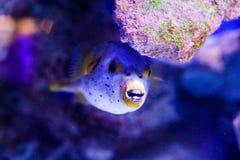 Mondo subacqueo meraviglioso e bello con i coralli ed il pesce tropicale immagini stock