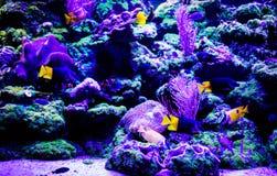 Mondo subacqueo meraviglioso e bello con i coralli ed il pesce tropicale immagini stock libere da diritti