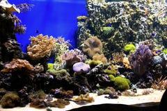 Mondo subacqueo Oceanarium a Mosca Moskvarium immagini stock libere da diritti