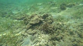 Mondo subacqueo, oceano, mare, video d archivio