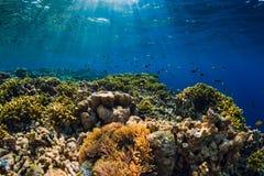 Mondo subacqueo selvaggio con i coralli ed il pesce tropicale fotografia stock libera da diritti