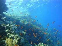 Mondo subacqueo variopinto del Mar Rosso fotografia stock libera da diritti