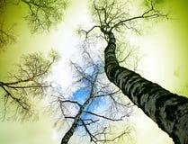 Mondo verde Immagine Stock Libera da Diritti
