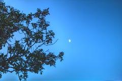 Mondscheinreflexionen stockbilder