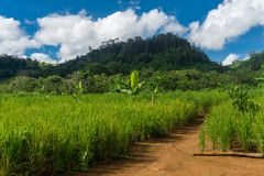 Mondulkiri, Cambodia. 18km hike to a Bunung Village in Cambodia Royalty Free Stock Image
