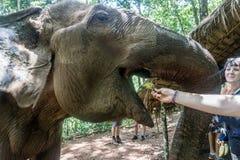 Mondulkiri, Kambodża zdjęcia royalty free