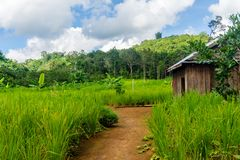 Mondulkiri, Kambodża zdjęcie royalty free