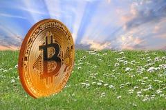 Moneda de oro digital del cryptocurrency de Bitcoin fotos de archivo