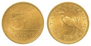 Moneda del forint de 5 húngaros imagen de archivo libre de regalías