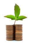 Monedas con crecimiento vegetal Fotografía de archivo libre de regalías