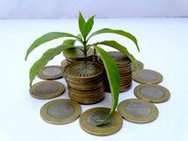 Monedas con la pequeña planta en el fondo blanco Foto de archivo