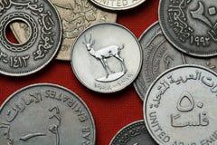 Monedas de los United Arab Emirates Gacela de la arena imagen de archivo libre de regalías