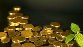 Monedas de oro en fondo negro Éxito del negocio de las finanzas, inversión, monetización de ideas, riqueza, depositando concepto almacen de video