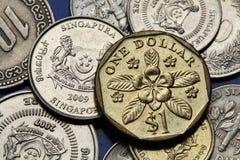 Monedas de Singapur Fotos de archivo libres de regalías