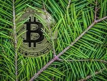 Monedas del btc en las ramas de la picea Regalo crypto de la Navidad fotos de archivo