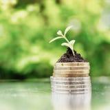 Monedas en suelo con la plántula en fondo verde Concepto del crecimiento de dinero Alto filtro dominante fotos de archivo libres de regalías