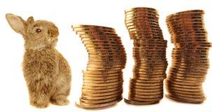 Monedas y conejo Foto de archivo libre de regalías
